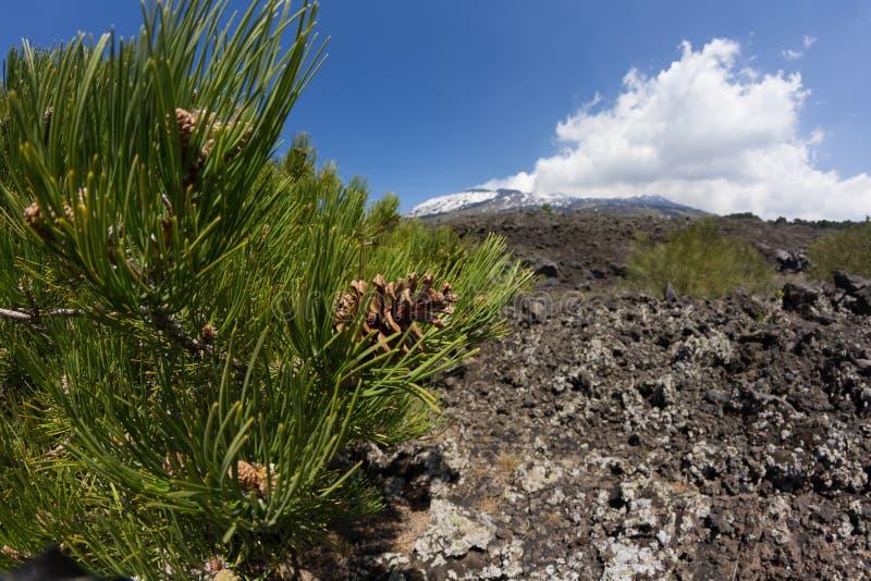 Etna Landscape fotografie stock