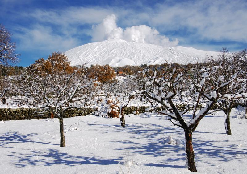 Etna Park Snowcovered Orchard, Sicily. Etna Park and snowcovered orchard, Sicily stock photo