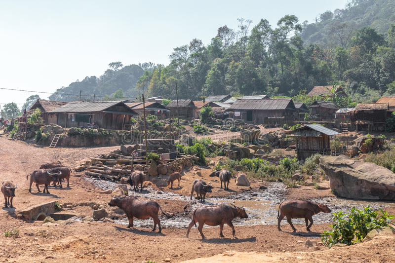 Etnisch minderheidsdorp met waterbufallos in Laos stock afbeeldingen