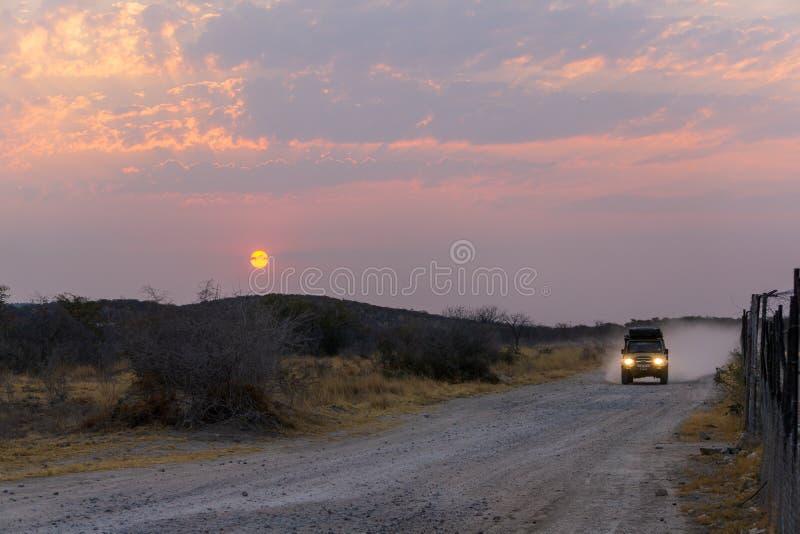 ETOSHA FILTERT, NAMIBIË - AUGUSTUS 29, 2018: Woestijnsafari in auto bij zonsondergang van de dag stock fotografie