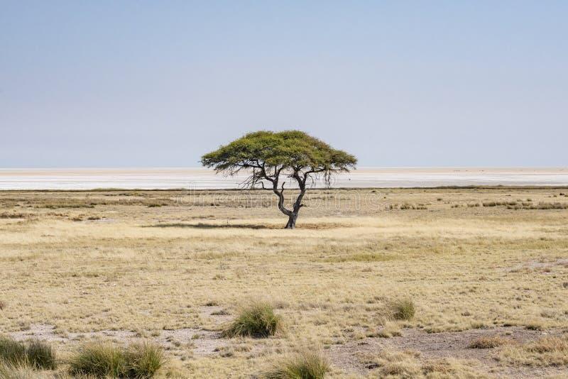Etosha National Park stock photos