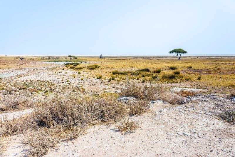 Etosha niecka i otwarte sawannowe równiny Etosha park narodowy zdjęcie stock