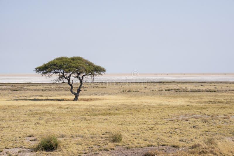 Etosha's panorama stock image