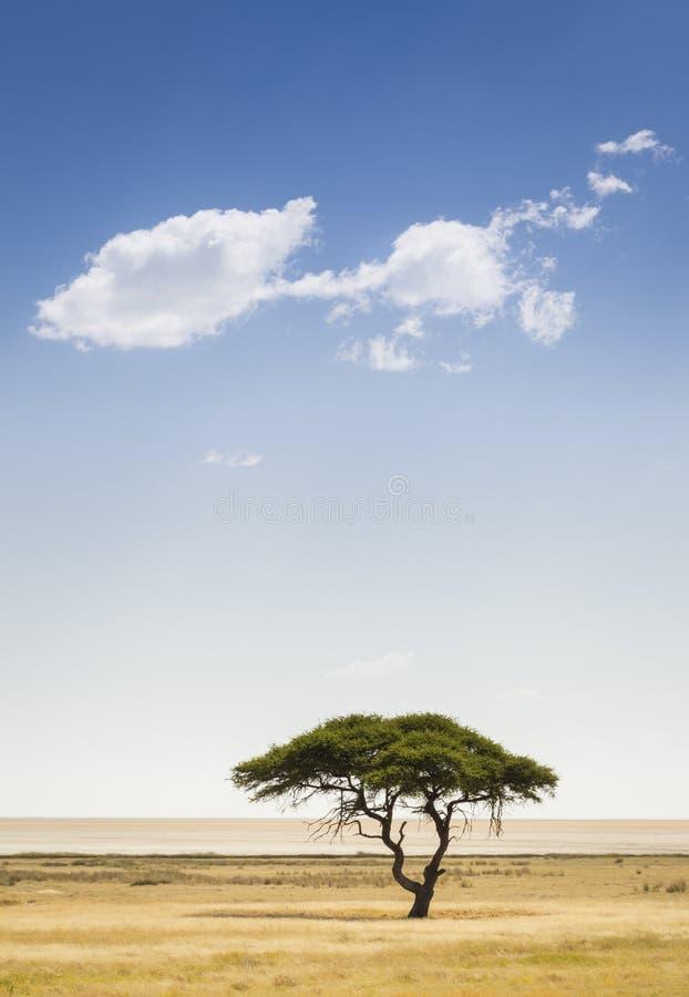 Etosha. A tree and a cloud, Etosha National Park, northwestern Namibia, Africa royalty free stock photo