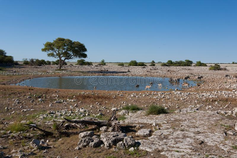 Etosha waterhole stock photo