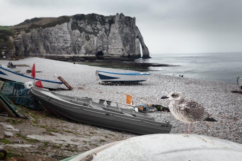 Etretat峭壁和海鸥在诺曼底,法国 库存照片