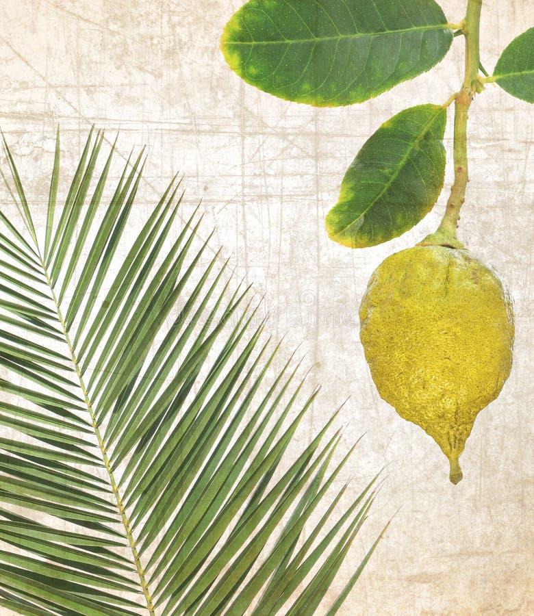 Etrog maduro amarillo Fruta y hojas de palma cítricas para el sukkah fotos de archivo