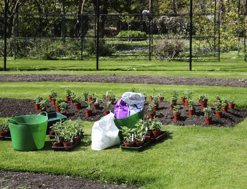 Ett arbete på att plantera plantor av blommor på blomsterrabatten i parkerar i vår arkivbilder