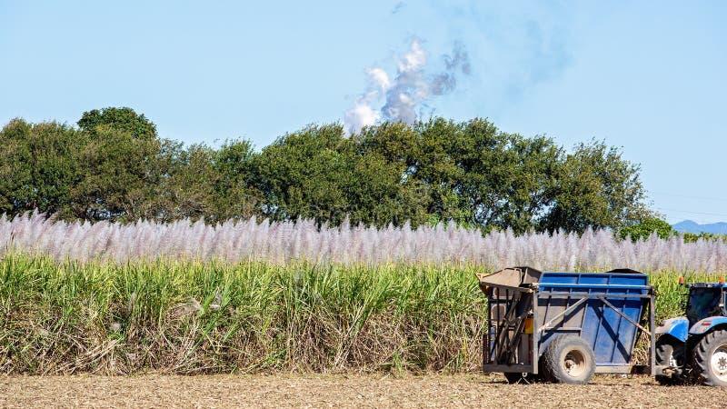 Ett australiskt fält av Sugar Cane Being Harvested arkivfoton