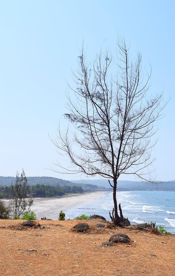 Ett avlövat kalt träd mot blå himmel med bakgrund av stranden arkivbilder