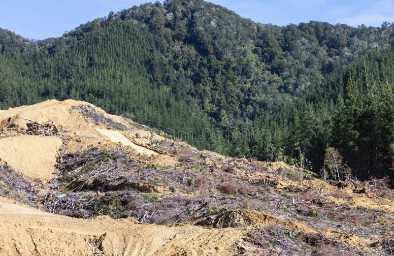 Ett avverkat område av skogen royaltyfri bild