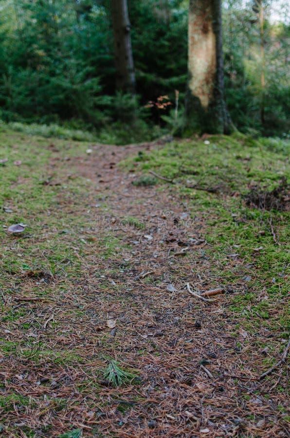 Ett banaspår i en lös mörk skog arkivbild