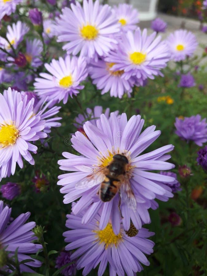 Ett bi på en sommardag arkivfoto