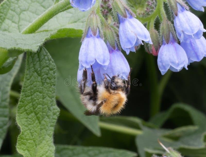 Ett bi satt på en blomma fotografering för bildbyråer