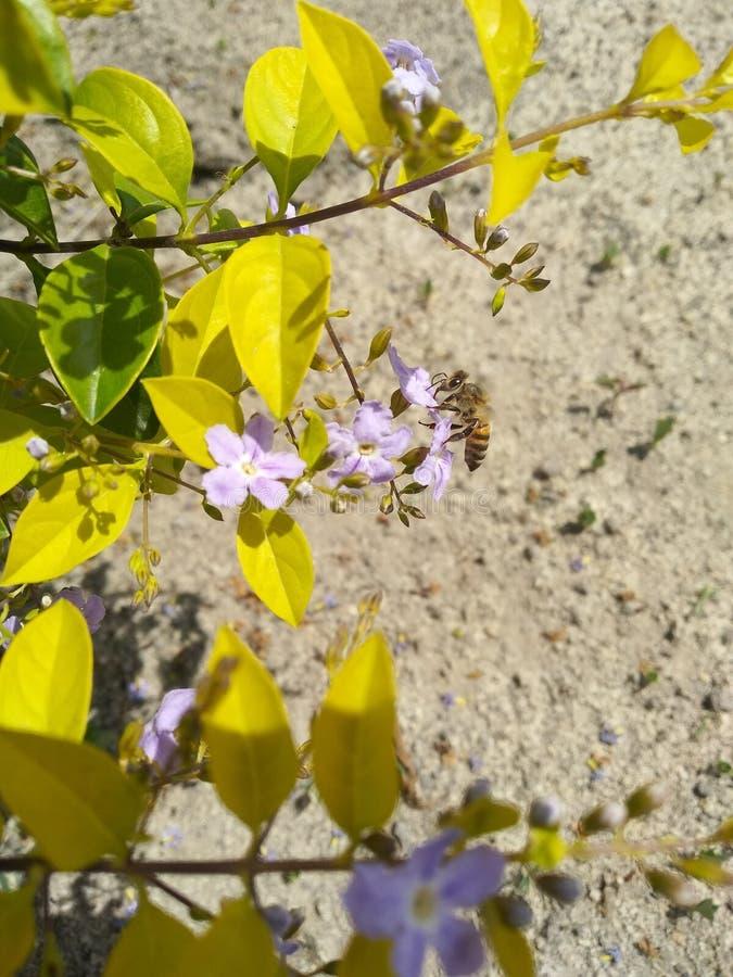 Ett bi som tar honung från blomman i den blommiga trädgården och på en härlig solig dag royaltyfria foton