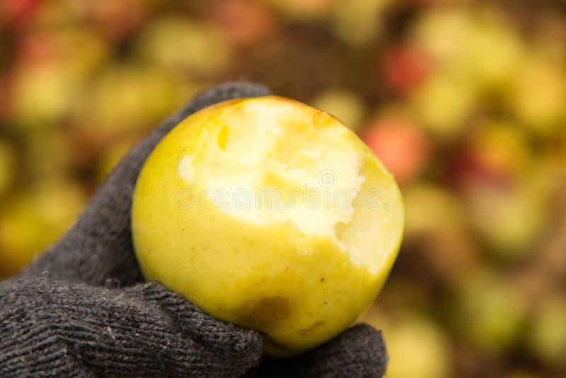 Ett bitit äpple i hans hand utomhus arkivfoto