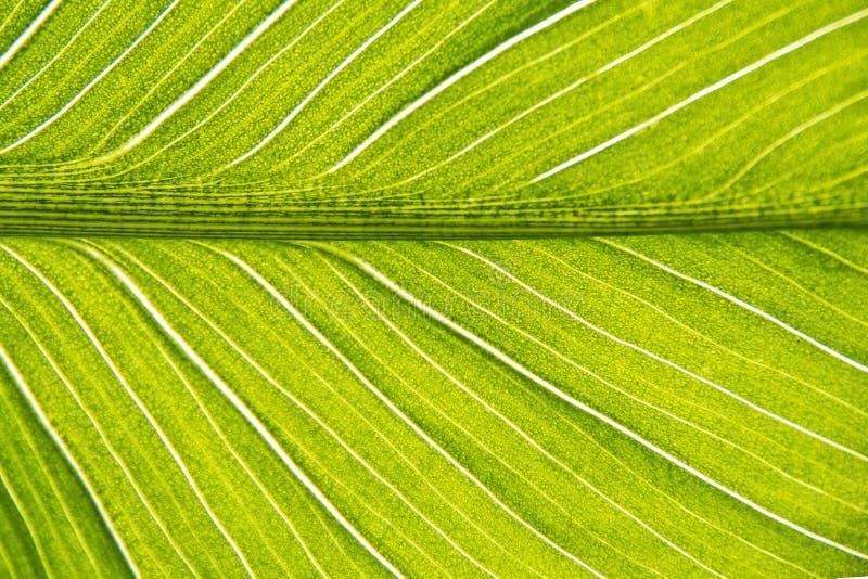 Ett blad av en tropisk inomhus blommanärbild fotografering för bildbyråer
