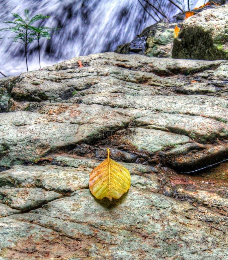 Ett blad på en vagga nära en vattenfall royaltyfria bilder
