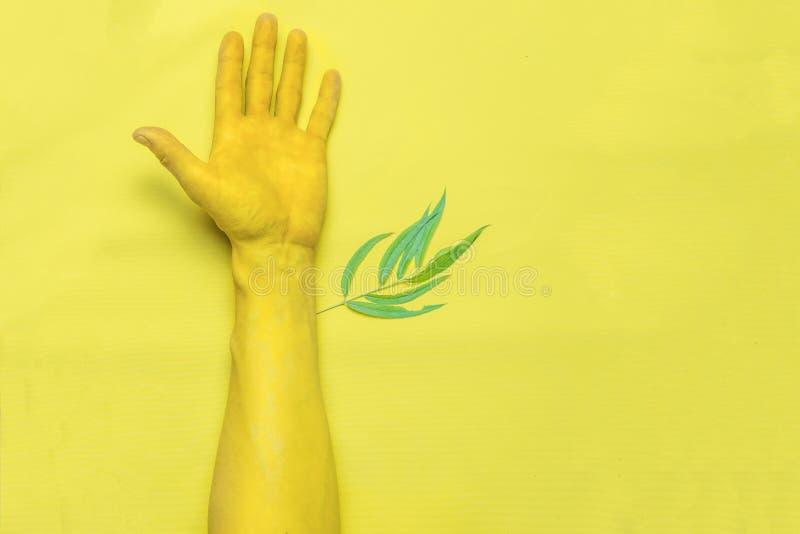 Ett blad växer från en hand, gul backgraund Top besk?dar tonat arkivbilder