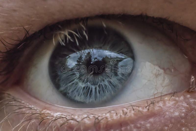 Ett bollslut för blått öga upp royaltyfria bilder