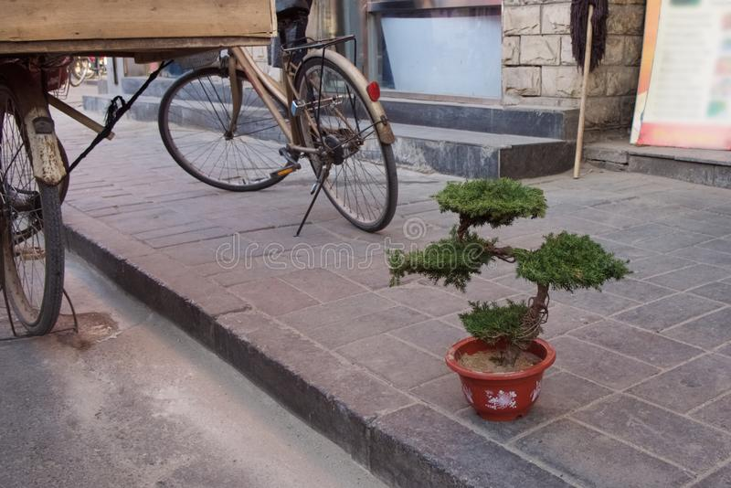 Ett bonsaiträd i en kruka står på trottoaren i streen royaltyfri foto
