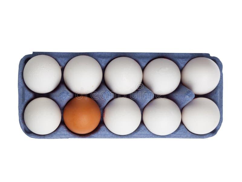 Ett brunt ägg bland vitägg royaltyfri bild