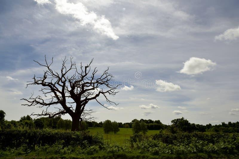 Ett dött träd, en äng royaltyfria bilder