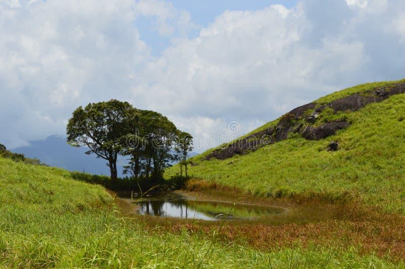 Ett damm i djungeln arkivbilder