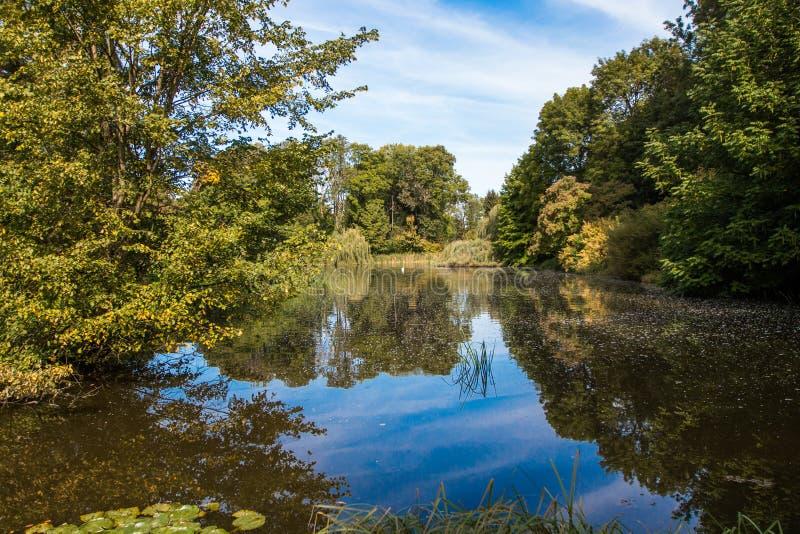Ett damm som ses i skogen royaltyfria foton