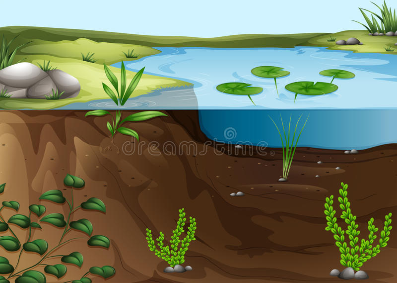 Ett dammekosystem vektor illustrationer