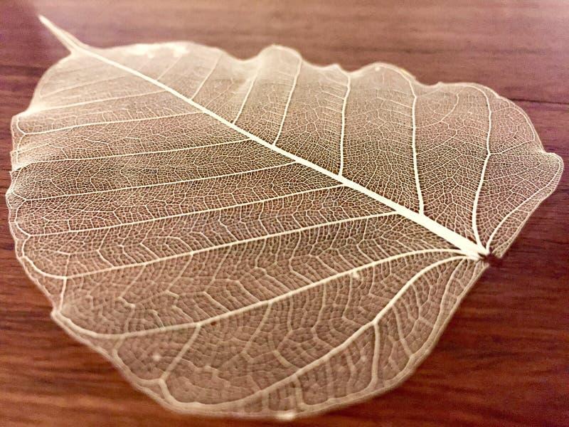 Ett dekorativt skelett- blad arkivfoto