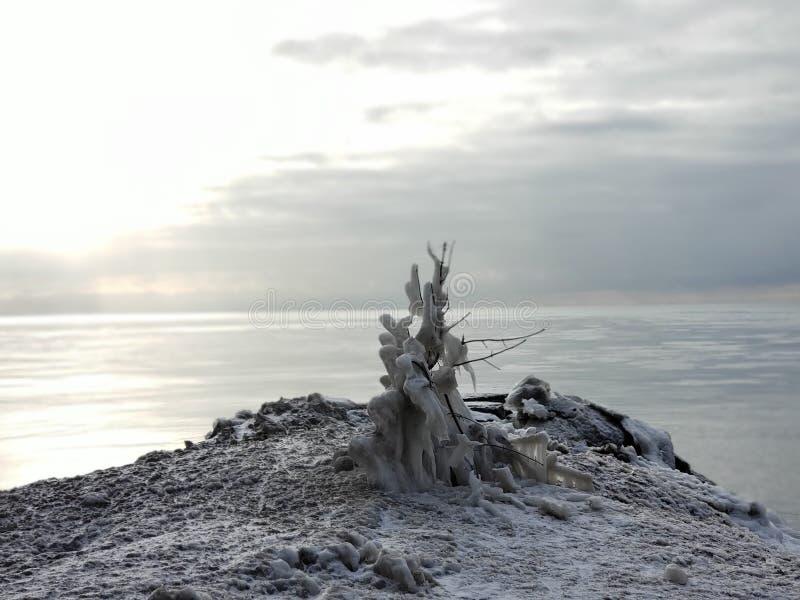 Ett djupfryst träd nästan sjön royaltyfria foton