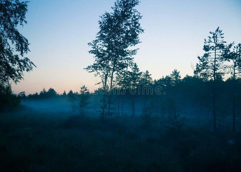 Ett drömlikt träsklandskap för soluppgången Färgrik dimmig blick Träsklandskap i gryning royaltyfri foto