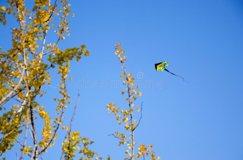 Ett drakeflyg i hösthimlen royaltyfri foto