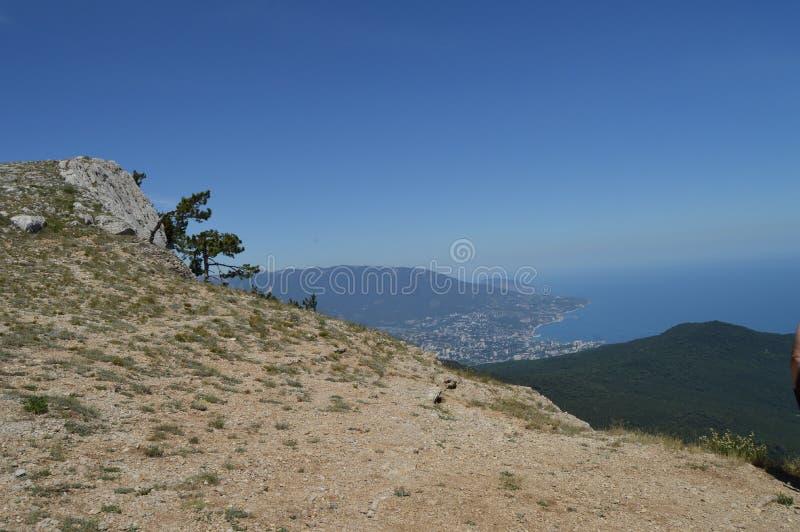 Ett ensamt sörjer trädet med en buktig stam på en bergssida, mot en blå himmel royaltyfri fotografi