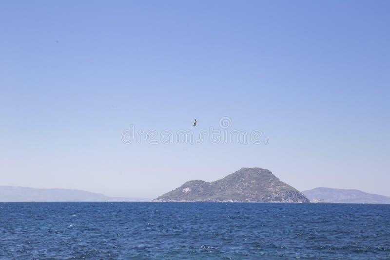 Ett ensamt seagullflyg på havet mot bakgrunden av monteringen arkivfoto