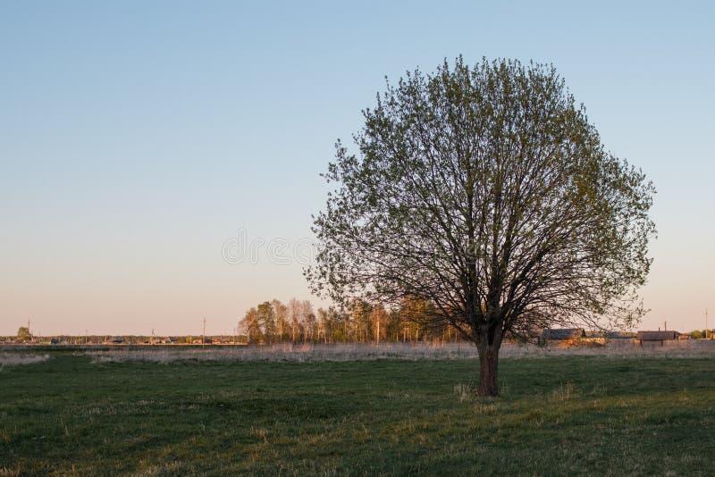 Ett ensamt träd i mitt av ett fält mot en by Ursnygg krona Halvöppna sidor skyen f?r showen f?r v?xter f?r r?relse f?r den f?rfal arkivbilder