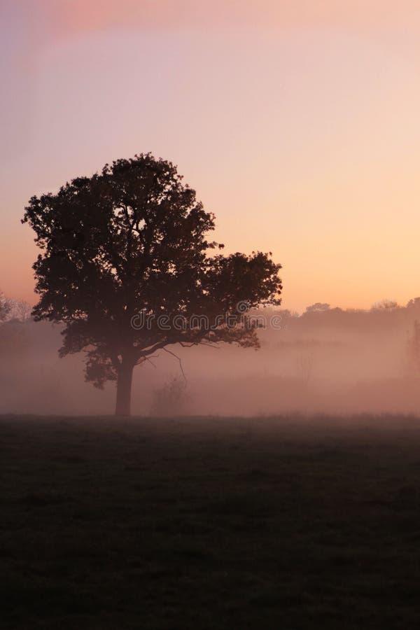 Ett ensamt träd på en dimmig morgon arkivfoto