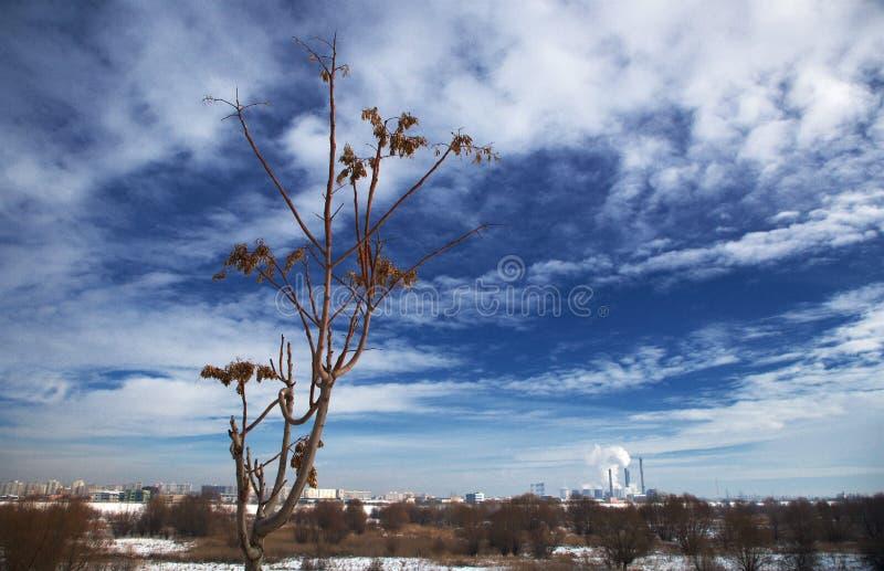 Ett ensamt träd på kanten av den naturliga 'Vacarestien parkerar ', royaltyfri foto