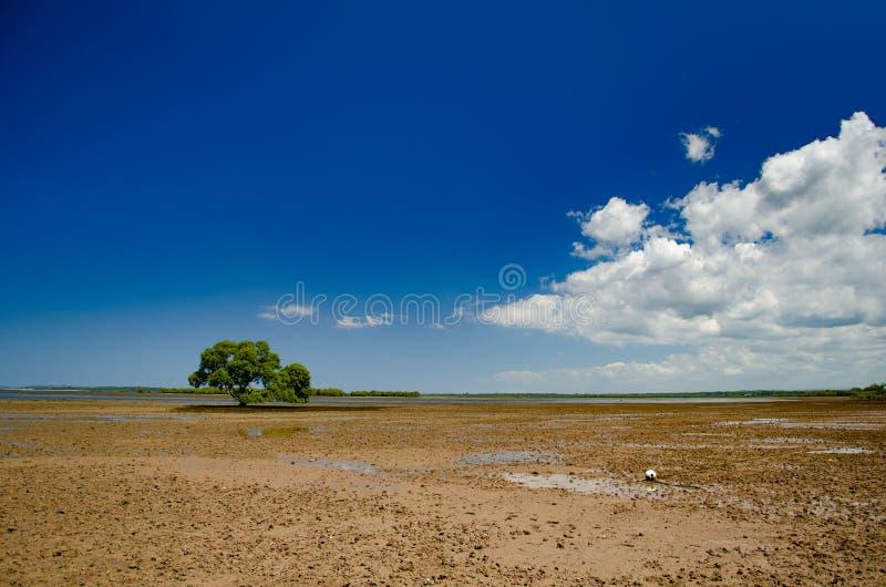 Ett ensamt träd på lågvatten på en strand i Queensland, Australien arkivbild