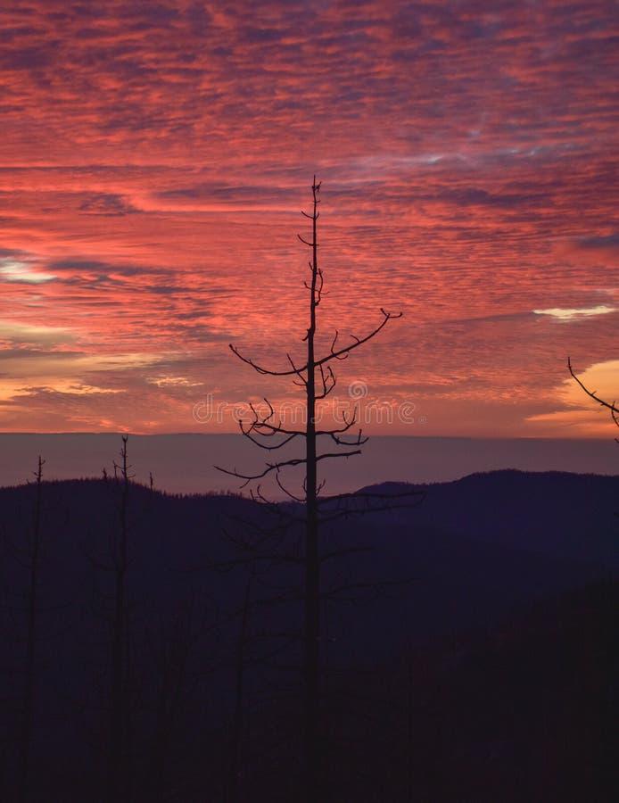 Ett ensamt träd på solnedgången arkivbild
