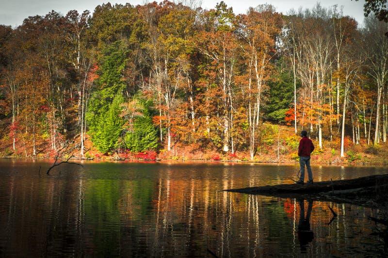 Ett ensligt ögonblick på Rose Lake på Hocking kullar i nedgången royaltyfri fotografi