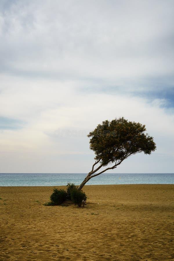 Ett ensligt träd på en sandig strand mot havet royaltyfria foton