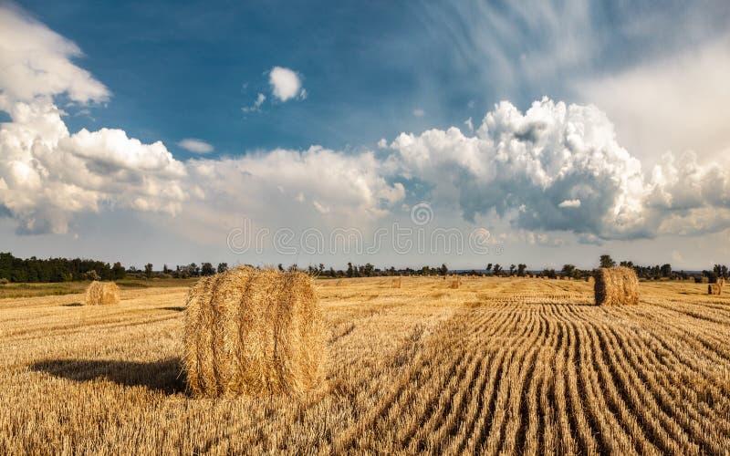 Ett fält av sugrörbaler fotografering för bildbyråer