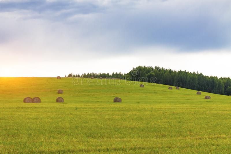Ett fält i sommar med sugrör mot bakgrunden av skogar, himmel och moln royaltyfri foto