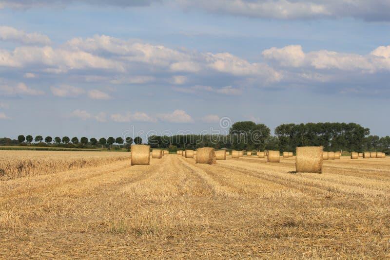 Ett fält med hö- och sugrörbaler arkivfoto
