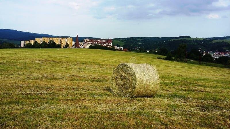Ett fält med kärven av hö, Bardejov, Slovakien royaltyfria bilder