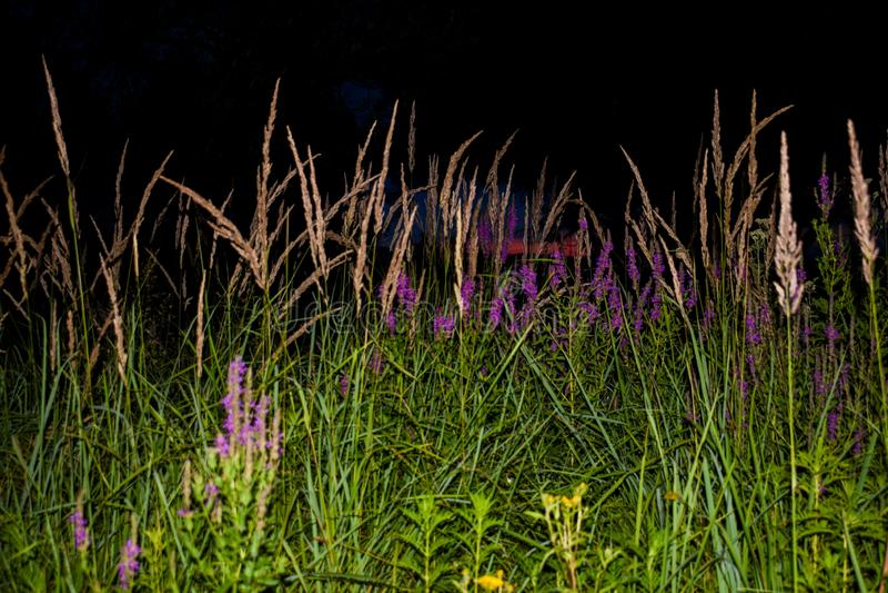 Ett fält med massor av grönt gräs, färgrika fältblommor Foto som tas i aftonen, på solnedgången, på en härlig sommardag arkivfoton
