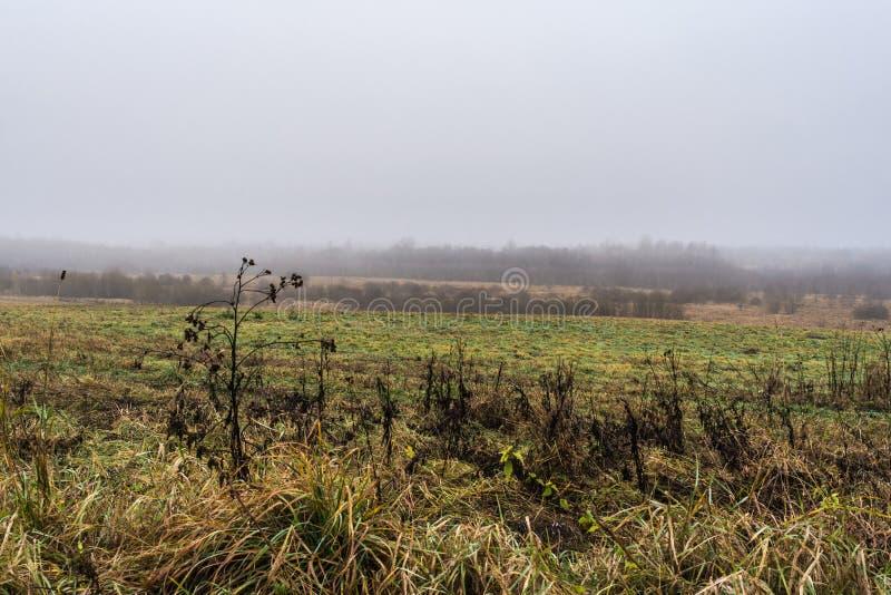 Ett fält med torrt gräs och stenar, skogen täckas med fo royaltyfri foto