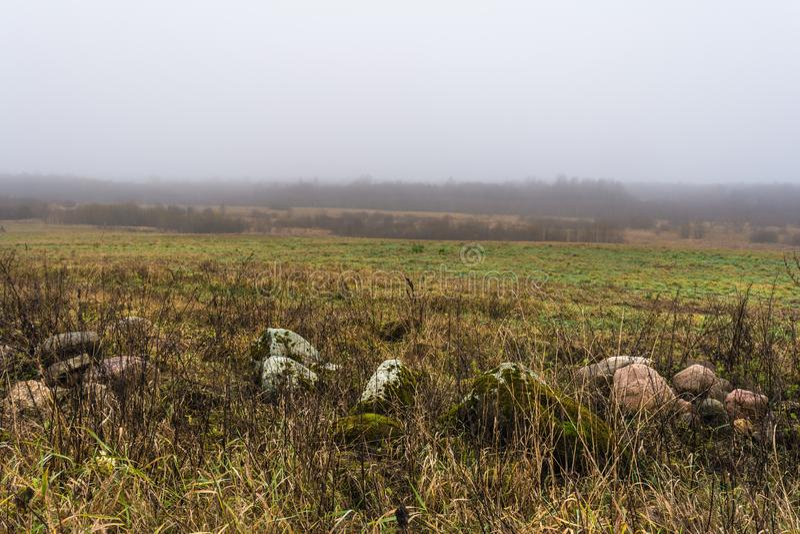 Ett fält med torrt gräs och stenar, skogen täckas med fo fotografering för bildbyråer